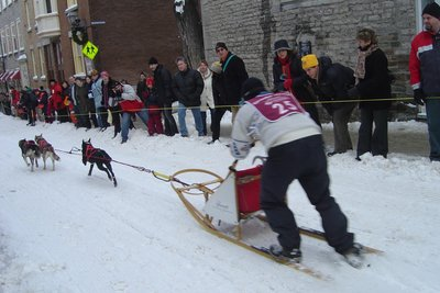 Dog Sled Race - Quebec City