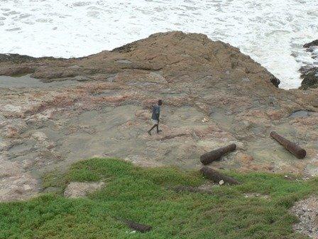 Strandloper on the rocks