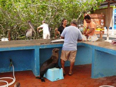 Puerto_Ayo..verkauf.jpg
