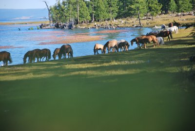 Bonda lake Camp&#39;s horses at the Lake side Mongolia Lake Khovsgol