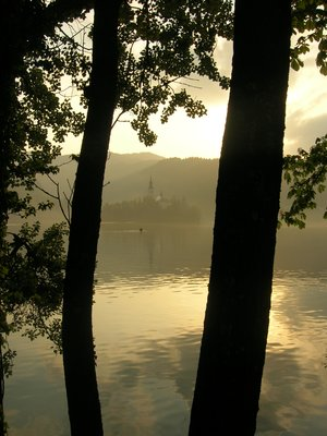 Trees at sunset at Lake Bled
