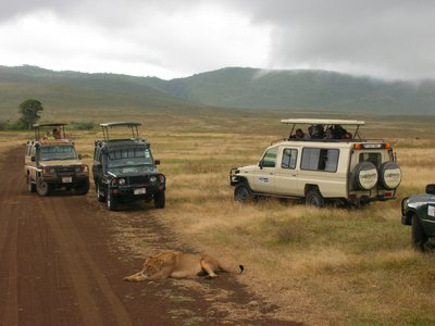 Lioness in Ngorogoro National Park