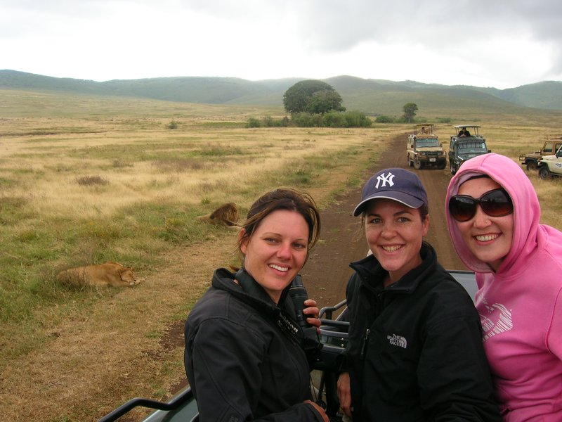 Checking out wild lions in Ngorogoro crater