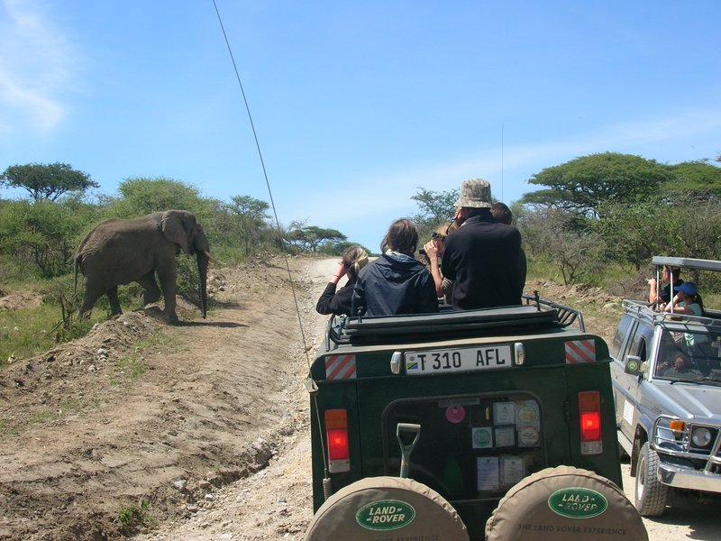 Wild elephant crossing the road in Ngorogoro Crater