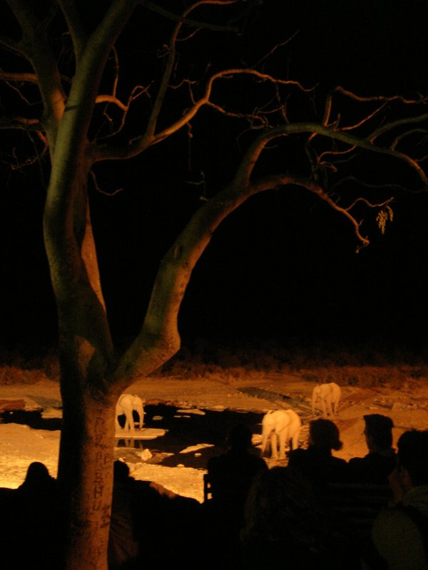 People watching the waterhole at night