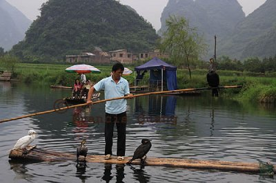 Fisherman lifing a cormorant from water after its catch, Yangshuo, Guangxi, China