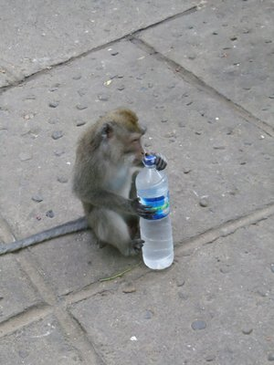 The monkey that stole my water!