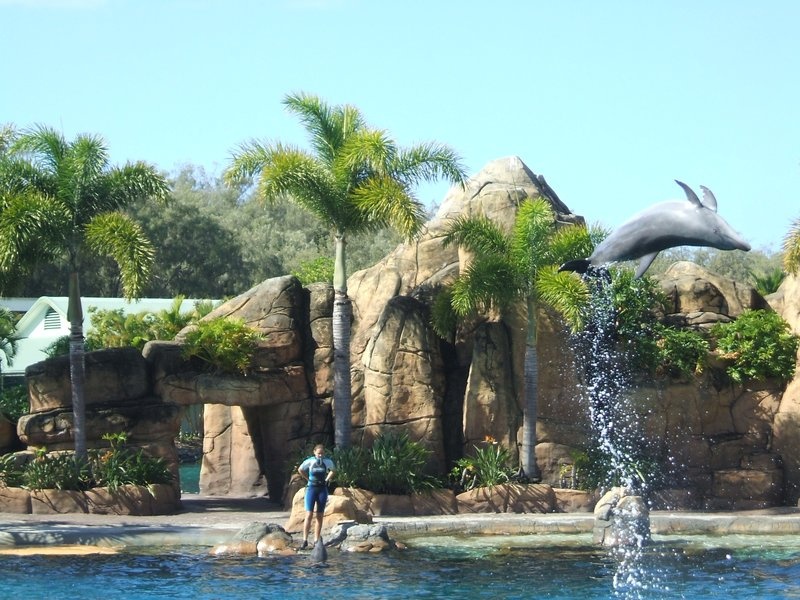 Dolphin Show, Seaworld, Gold Coast, Australia