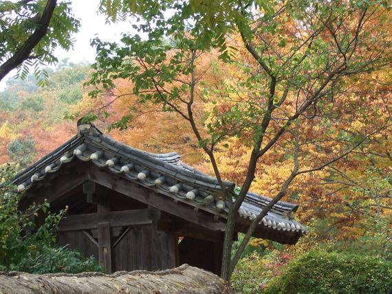 Beautiful Autumn View, South Korea