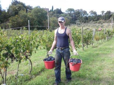 Red_Grape_Harvest_2.jpg