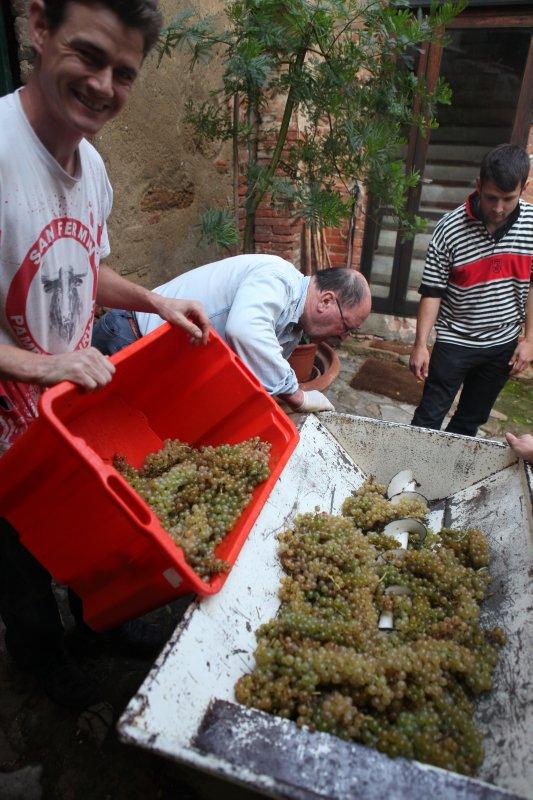 large_White_grape_harvest_8.jpg