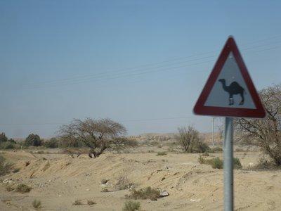 Sinai_137.jpg