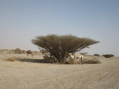Sinai_139.jpg