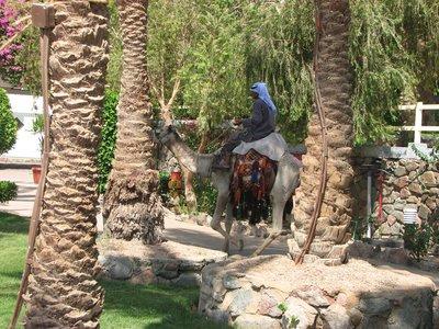 Sinai_225.jpg