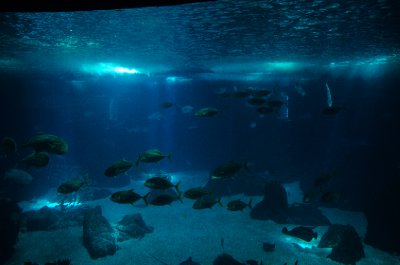 Center tank, Lisbon Oceanarium