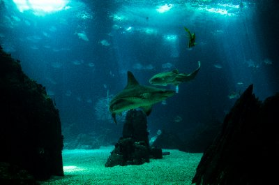 Sharks in the center tank, Lisbon Oceanarium