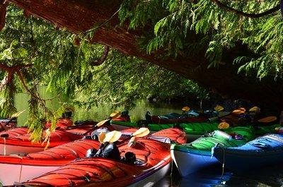 Kayaks, Tofino