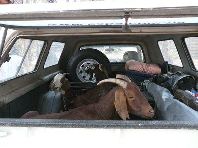 Unexpected passengers