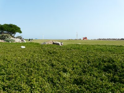 Greenery, Swakopmund beach