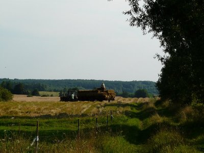 Harvest, Warmia-Masuria