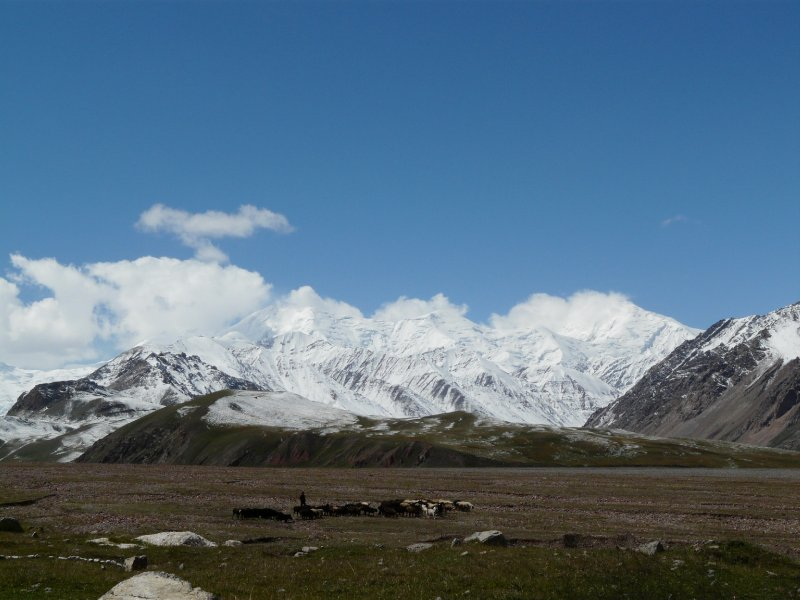 Cattle grazing in the Pamirs, seen from the Tajik-Kyrgyz border
