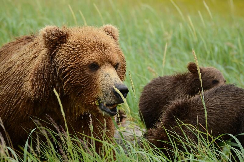 Bears at close range