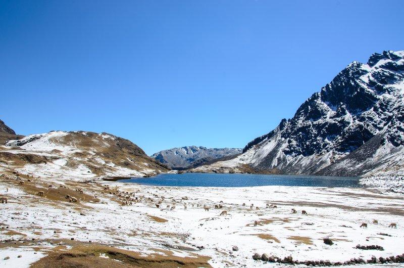 Alpacka land, laguna Jatun Pucacocha lake