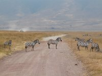 Zebra Crossing :)