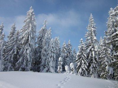 Lot's of snow