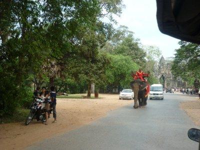 elephants at park entrance
