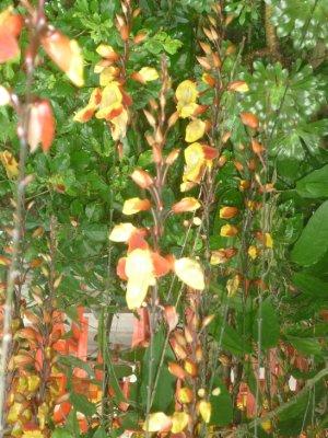 Flowers in hostel 6