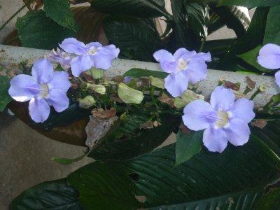 Flowers in hostel 5
