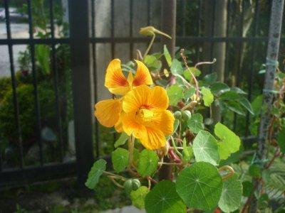 Flowers in hostel 4