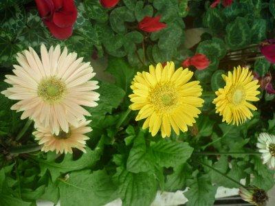 Flower 4, 5, 6!