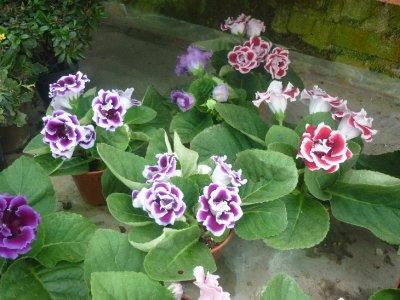 Green house flower 3