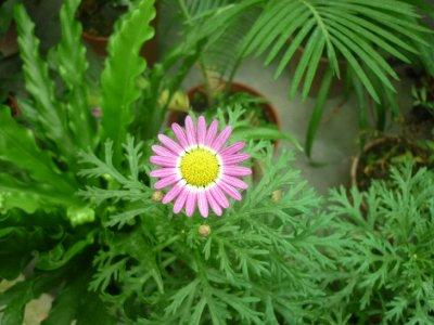 Greenhouse flower 2