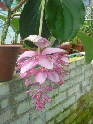 Green house flower 1