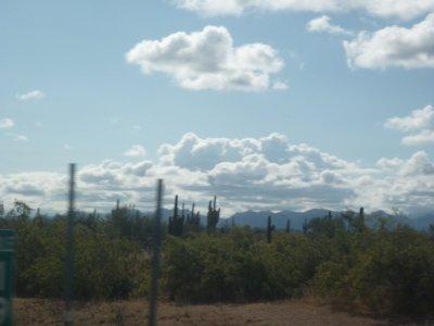 Cactus adios