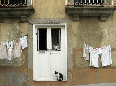 Cat And Dog In Porto