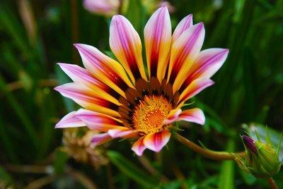 Toledo Flower