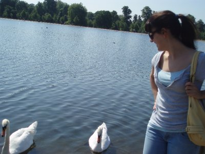 Swans in Kensington Park