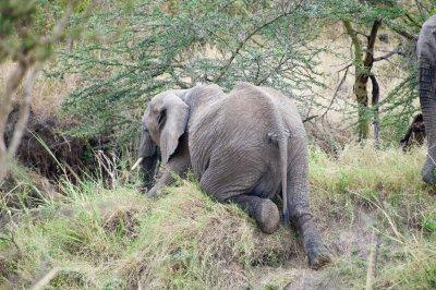 Elephant_Climbingaa.jpg