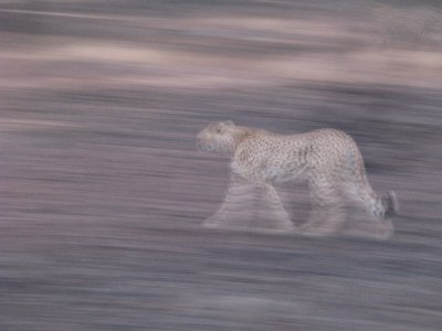 blurred_cheetah.jpg