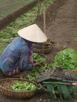 Lady tending herbs at 'The Organic Village', Hoi An