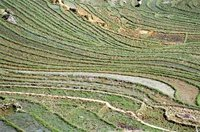 Rice fields near Sa pa