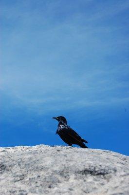 Bird on Mountain