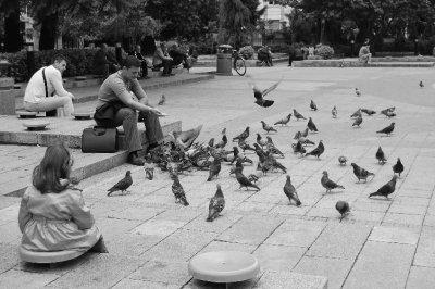 Man feeding pigeons