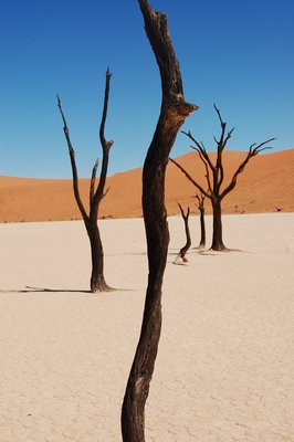 Tree trunks in Deadvlei