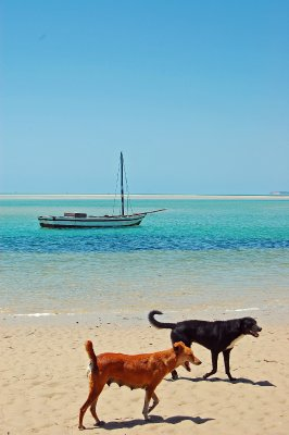 Dogs and boats 3