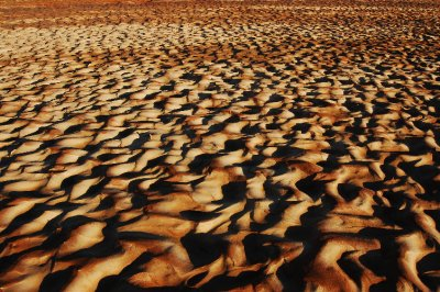 After the rains in Sossusvlei